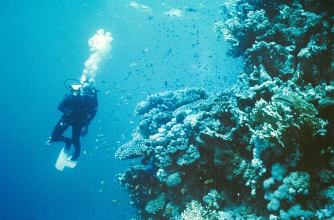 Dud+corals