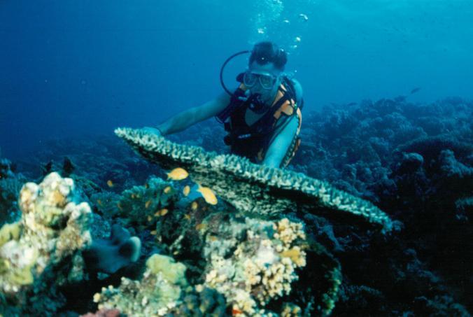 Dud+corals2