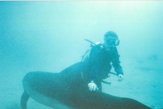 Dud+shark