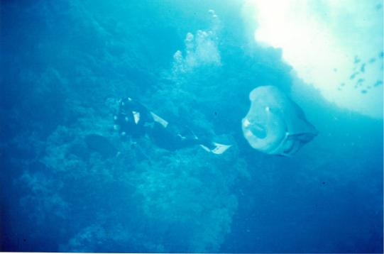 Dud+weirdFish
