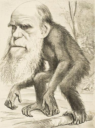 Charles_Darwin_as_an_ape_(1871)